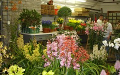 Preparations for Philidelphia Flower Show