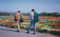 A sample garden in Holland : 1982