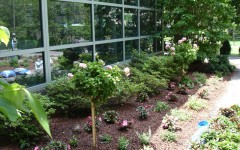 Our Gardens: New York Hospital: Magic Garden